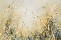 Långt gräs i en äng Royaltyfri Foto