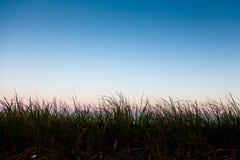 Lång grässilhouette med rum för text Royaltyfria Foton