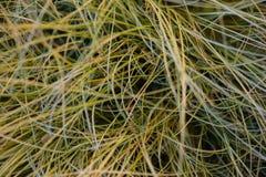 Långt grönt gräs för textur Royaltyfri Fotografi