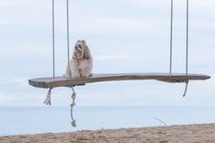 Långt hårhund och hav arkivbild
