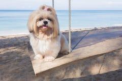 Långt hårhundstrand och hav royaltyfria bilder
