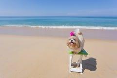Långt hårhundstrand och hav arkivbild