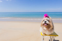Långt hårhundstrand och hav arkivfoton