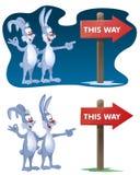 långt Kaniner grundar vägvisaren Royaltyfri Bild