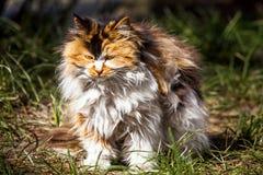 långt katthår royaltyfri fotografi