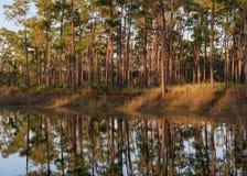 Långt sörja nyckel- sjöskogreflexioner fotografering för bildbyråer