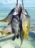 Lås av den dagfiskDiani stranden Royaltyfri Bild