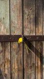 låst dörr arkivbild