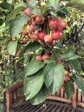 Låt stilleben med äpplefilialen arkivfoto