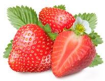 låter vara att fresta för jordgubbar Royaltyfri Foto