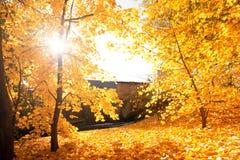 låter vara den färgglada skogen för hösten landskap Fotografering för Bildbyråer
