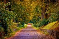 låter vara den färgglada skogen för hösten landskap royaltyfri fotografi