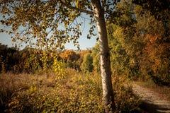 låter vara den färgglada skogen för hösten landskap Arkivbild