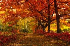 låter vara den färgglada skogen för hösten landskap Arkivfoto
