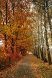låter vara den färgglada skogen för hösten landskap Royaltyfri Foto