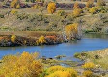 låter vara den färgglada skogen för hösten landskap Royaltyfria Foton