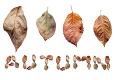 låter vara den färgrika designen för hösten kranen Nedgångsidor på en vit bakgrund med text: HÖST Royaltyfria Foton