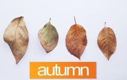 låter vara den färgrika designen för hösten kranen Nedgångsidor på en vit bakgrund med text: HÖST Arkivfoton
