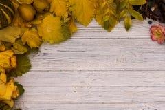låter vara den isolerade härliga ramen för hösten verklig white royaltyfria bilder