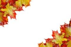 låter vara den isolerade härliga ramen för hösten verklig white Royaltyfri Fotografi