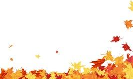 låter vara den isolerade härliga ramen för hösten verklig white Arkivbilder