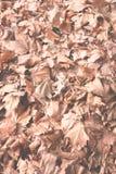 låter vara den täta kopian för hösten upp avstånd Royaltyfria Bilder