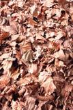 låter vara den täta kopian för hösten upp avstånd Royaltyfri Foto