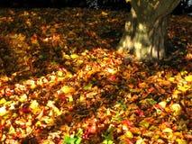 låter vara den täta kopian för hösten upp avstånd Arkivfoton