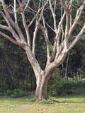 låter vara inga trees Fotografering för Bildbyråer