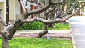 låter vara ingen tree Fotografering för Bildbyråer
