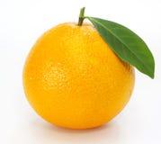 låter vara orange moget Fotografering för Bildbyråer
