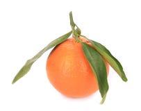 låter vara orange moget Royaltyfri Bild