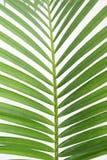 låter vara palmträdet Arkivfoton