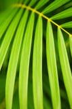 låter vara palmträdet Royaltyfria Bilder