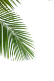 låter vara palmträdet Royaltyfri Fotografi