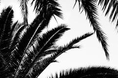 låter vara palmträdet framförde den svarta bilden för begreppet 3d white Royaltyfria Foton