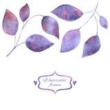 låter vara purple Royaltyfri Fotografi