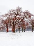 låter vara röda snowtrees Fotografering för Bildbyråer