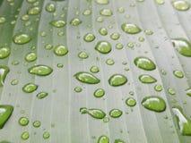 låter vara raindrops Vattensmå droppar på bananbladet Arkivfoto
