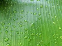 låter vara raindrops Vattensmå droppar på bananbladet Fotografering för Bildbyråer
