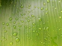 låter vara raindrops Vattensmå droppar på bananbladet Arkivbilder