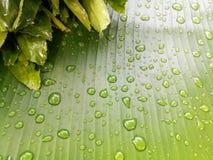 låter vara raindrops Vattensmå droppar på bananbladet Royaltyfria Bilder
