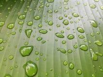 låter vara raindrops Vattensmå droppar på bananbladet Royaltyfri Fotografi