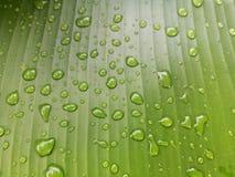 låter vara raindrops Vattensmå droppar på bananbladet Royaltyfria Foton