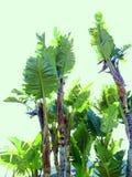 låter vara stor ljus tät green för bananen upp treen Arkivbild