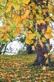 låter vara trees Royaltyfri Foto