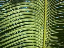 låter vara tropiskt Arkivbilder