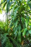 låter vara tropiskt grönt naturligt för bakgrund details naturen royaltyfri foto