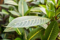 låter vara tropiskt grönt naturligt för bakgrund details naturen arkivbild