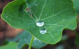låter vara waterdrops Royaltyfri Foto